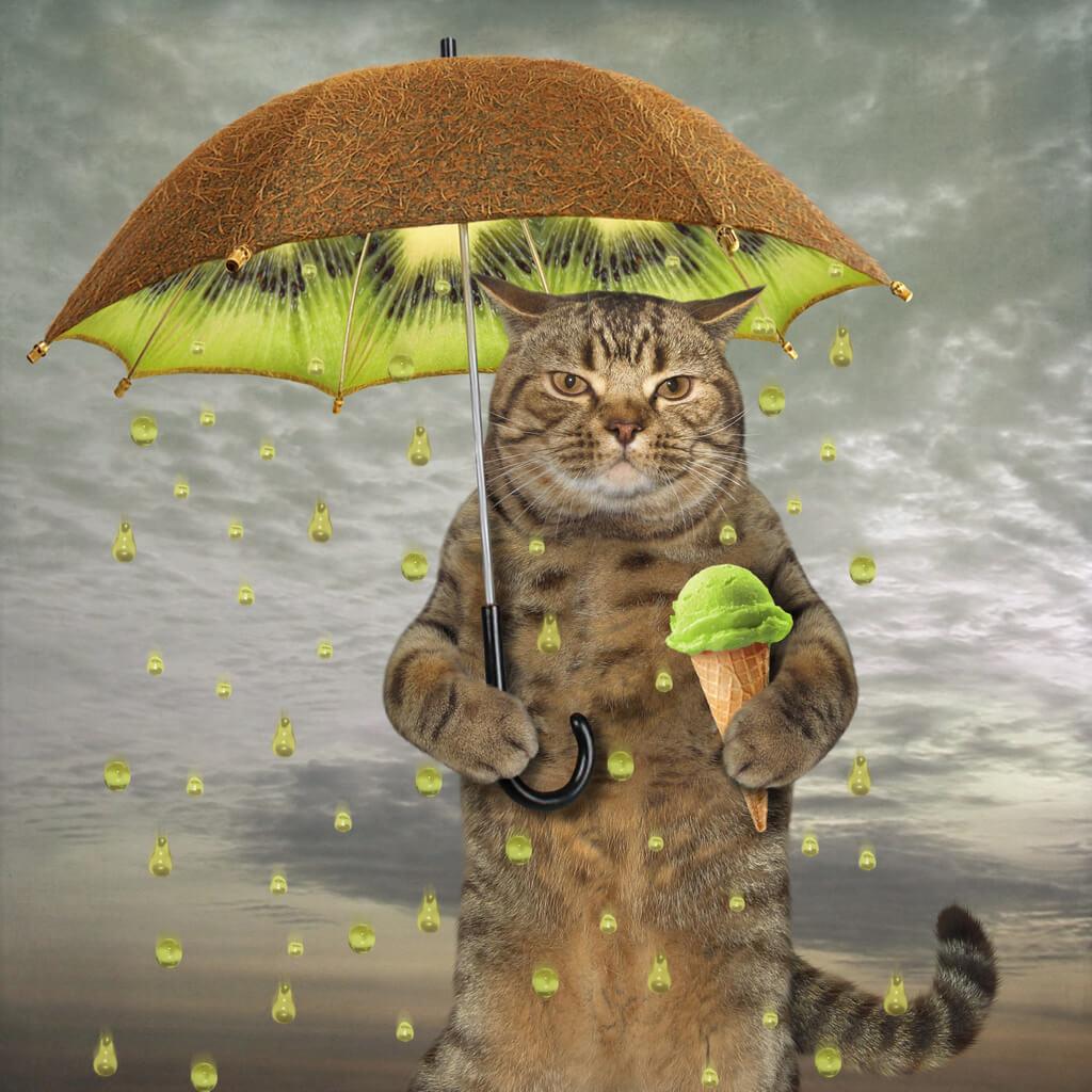 Cat eating ice cream under kiwi umbrella