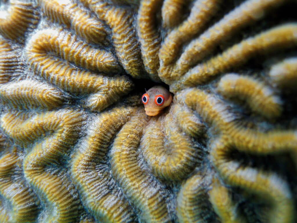 Fish with funny face